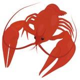 Lagostas vermelhas fervidas, lagostins Fotos de Stock