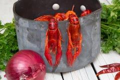 Lagostins cozinhados frescos com cebola e salsa e pimenta vermelha Lagostins fervidos woden o fundo Estilo rústico imagem de stock royalty free