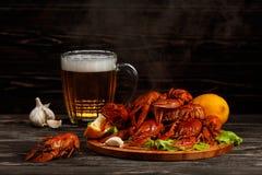 Lagostins fervidos quentes com uma caneca de cerveja Imagens de Stock Royalty Free