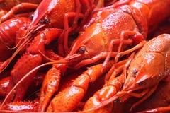 Lagostins vermelhos Fotografia de Stock