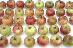 lagrade äpplen Royaltyfria Foton