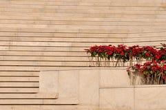Lagrar arrangerar och planterar med den röda blomman Royaltyfri Foto