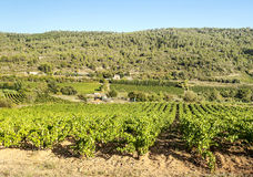 Lagrasse Vineyards Stock Photo