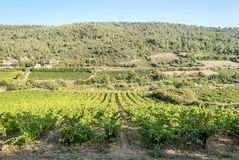 Lagrasse Vineyards Stock Image
