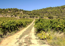 Lagrasse Vineyards Royalty Free Stock Photography
