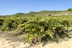 Lagrasse Vineyards Royalty Free Stock Images