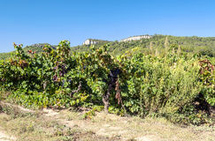 Lagrasse Vineyards Stock Images