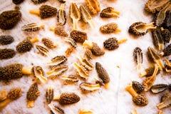 Lagret av rengjord och halverad ny morel plocka svamp Royaltyfria Foton