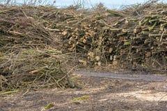 Lagring av olika trädstammar för vidareförädling i ett sågverk efter landröjning av en skog arkivfoto