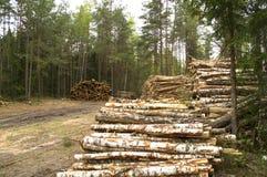 Lagring avverkade träd i en röjning i träna Arkivfoto
