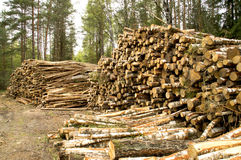 Lagring avverkade träd i en röjning i träna Arkivbilder