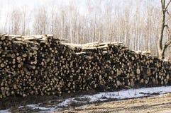 Lagring avverkade träd på skogkanten Fotografering för Bildbyråer