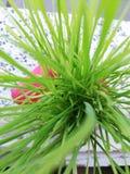 Lagt in grönt gräs, taget från över royaltyfri bild