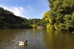 lagun Arkivfoto