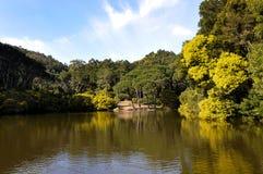 lagun Royaltyfria Foton