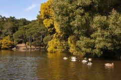 lagun Royaltyfri Bild