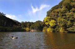 lagun Royaltyfri Fotografi