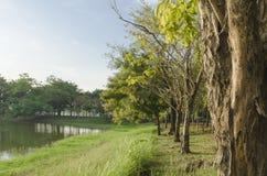 Laguna Fotografie Stock