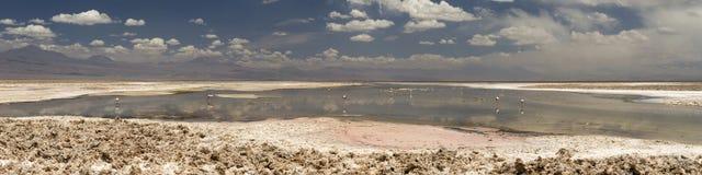 Laguna Altiplanica Стоковые Изображения RF
