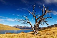 Laguna Azul, Patagonia, o Chile Fotos de Stock Royalty Free