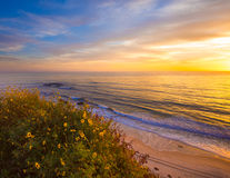 Laguna Beach. Popular travel destination; Laguna Beach California, against the sunset and wildflowers in bloom stock photos