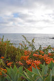 Laguna Beach Coastline & Gardens Royalty Free Stock Image