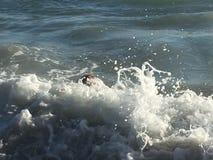 Laguna Beach, de golven van Californië Royalty-vrije Stock Fotografie