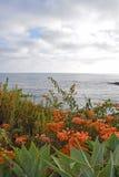 Laguna Beach ogródy & linia brzegowa Obraz Royalty Free