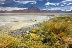 Laguna Blanca på den Siloli öknen & x28; Bolivia& x29; Arkivfoton