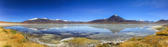 Laguna Blanca Panorama, bolivianska Altiplano Royaltyfria Foton