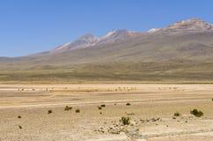 Laguna Blanca van de Pampa stock afbeelding
