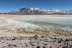 Laguna Blanca White lagun och Licancabur vulkan, Bolivia Arkivbilder