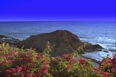 Laguna-Blumen am Strand stockfoto
