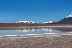 Laguna Canapa in Altiplano a salt lake, Bolivia Stock Photo