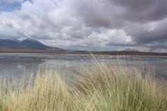 Laguna Capina, Atacama, Bolívia Fotos de Stock Royalty Free