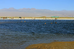 Laguna Cejar, Cile Fotografia Stock Libera da Diritti