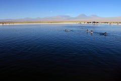 Laguna Cejar, чилеански Стоковая Фотография RF