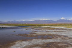 Laguna Cejar, Atacama, Чили стоковые изображения rf