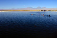 The Laguna Cejar, Chile Royalty Free Stock Photography