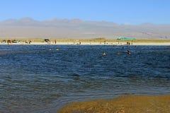 Lagunaen Cejar, Chile Royaltyfri Fotografi