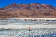 Laguna Celeste, Bolivië Royalty-vrije Stock Afbeeldingen