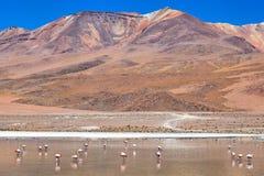 Laguna Celeste, Bolivia Stock Images