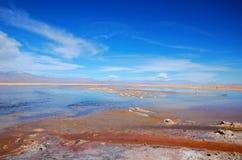 Laguna Chaxa в фламенко Лос национального заповедника Стоковые Фото