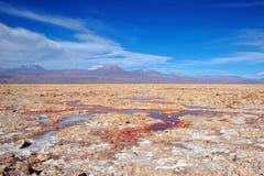 Laguna Chaxa в фламенко Лос национального заповедника Стоковая Фотография