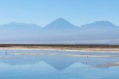 Laguna Chaxa Imágenes de archivo libres de regalías
