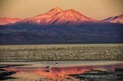 Laguna Chaxa, Chile Stock Images