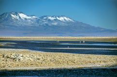 Laguna Chaxa, Chili royalty-vrije stock foto