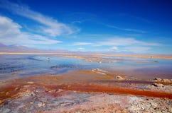 Laguna Chaxa en los flamencos del Los de la reserva nacional Fotografía de archivo
