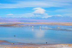 Laguna Chaxa in the National reserve Los Flamencos Royalty Free Stock Photography