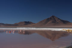 Laguna Colorada. (Red Lagoon) is a shallow salt lake in the southwest of the altiplano of Bolivia, within Eduardo Avaroa Andean Fauna National Reserve and close Stock Photo